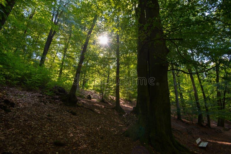 Raio de sol na floresta de Teutoburger em Westphalia em Alemanha fotografia de stock royalty free
