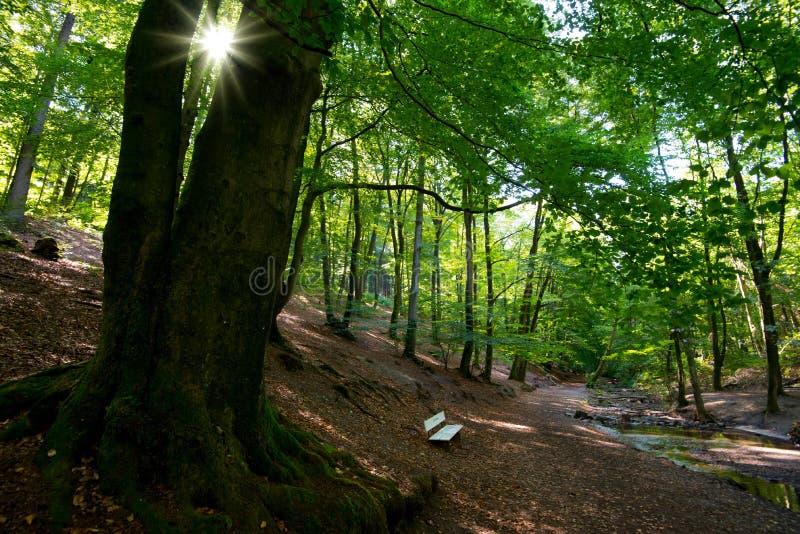 Raio de sol na floresta de Teutoburger em Westphalia em Alemanha imagem de stock