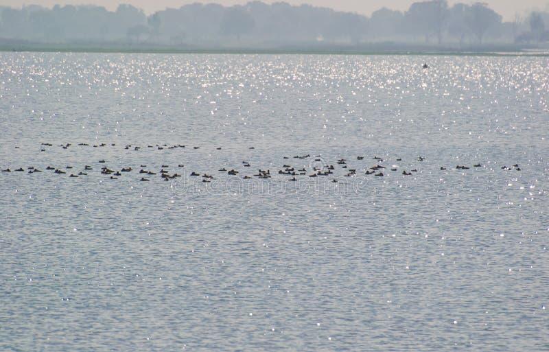Raios de brilho de Sun sobre a água do pantanal fotografia de stock royalty free