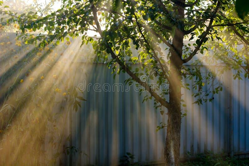 Raios de luz bonitos que fazem sua maneira através das folhas imagem de stock royalty free