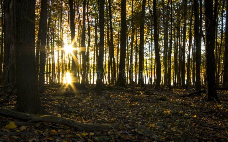 Raios de sol através das árvores fotos de stock royalty free