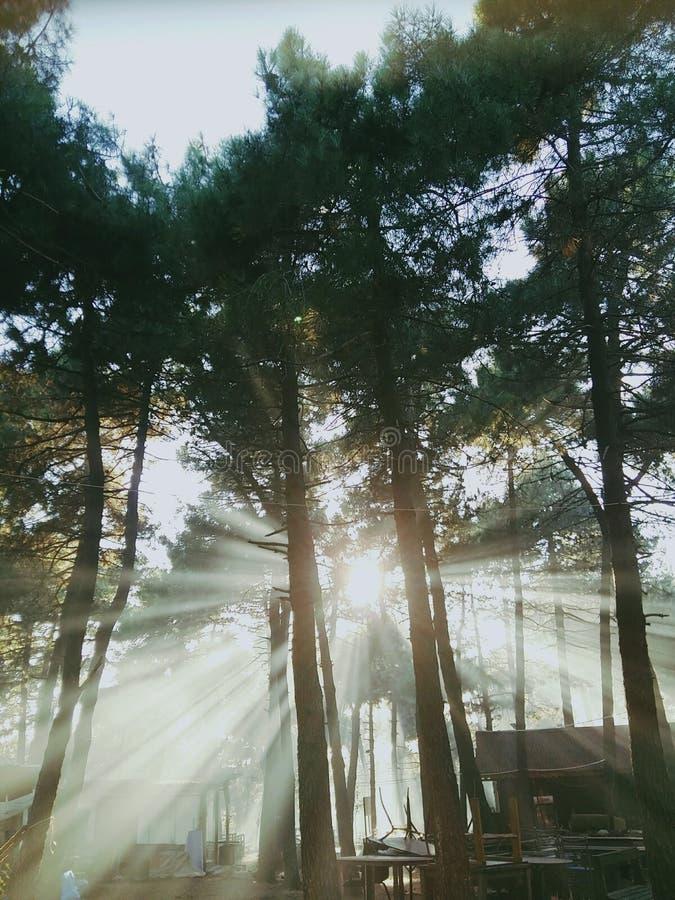 Raios de sol dirigidos através das madeiras fotografia de stock