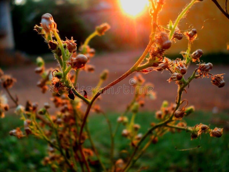 Raios de sol na manhã que faz o brilhante e bonito imagens de stock