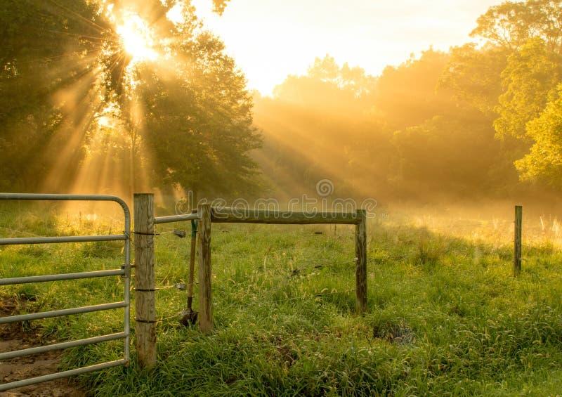 Raios de Sun da manhã que brilham através das árvores foto de stock