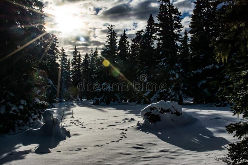 Raios do sol na floresta do inverno imagem de stock royalty free