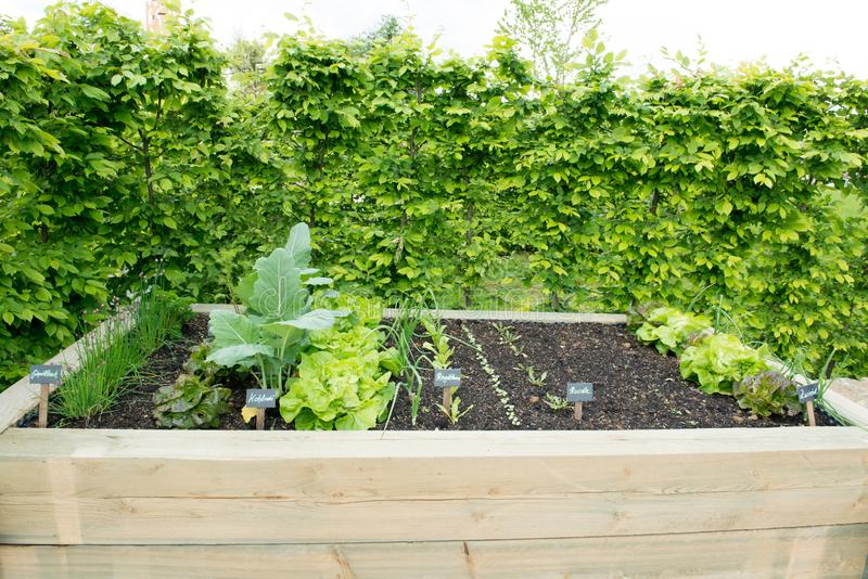 Raised Bed, Planting Bed, Vegetable Patch stock photography