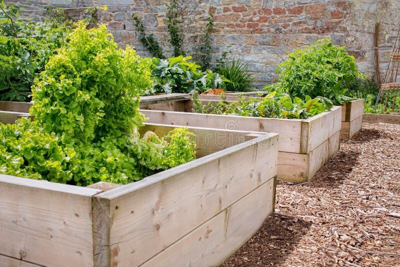 Raised Bed Vegetable & Flower Garden stock photography
