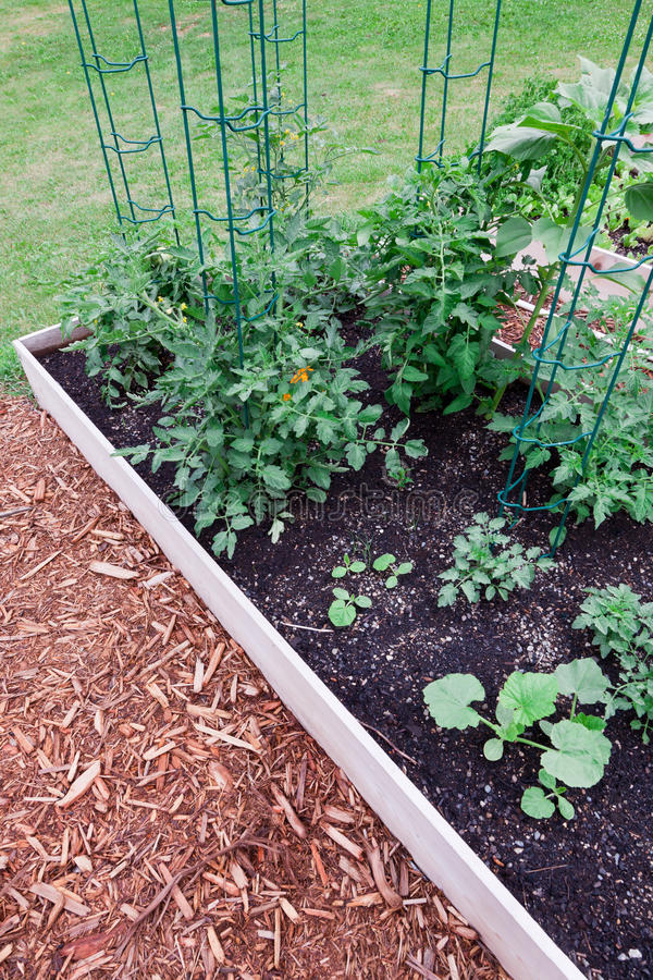 Download Raised Garden Tomatoes Stock Photography - Image: 24436492