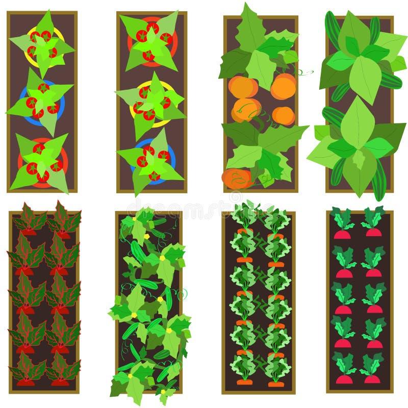 Download Raised gardens stock vector. Image of carrots, garden - 31544741