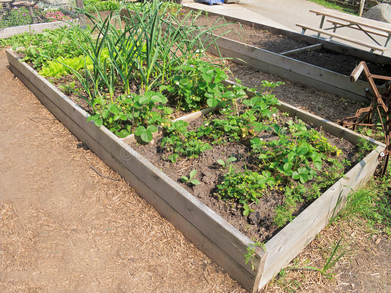 Download Raised vegetable garden stock image. Image of seasonal - 19831571