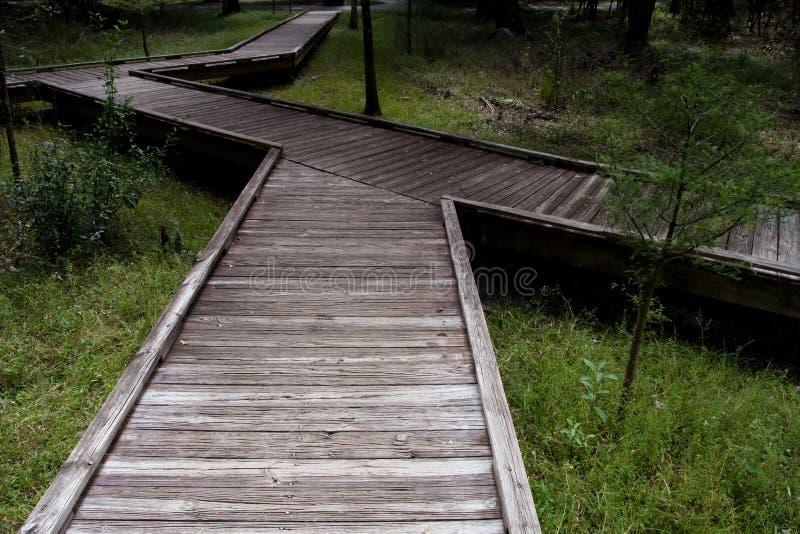 Download Raised Walkway stock image. Image of outdoors, trees, boardwalk - 7786603