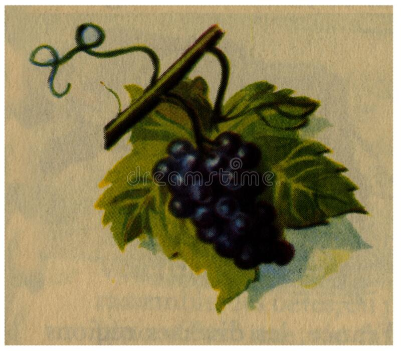 Raisin Noir Free Public Domain Cc0 Image