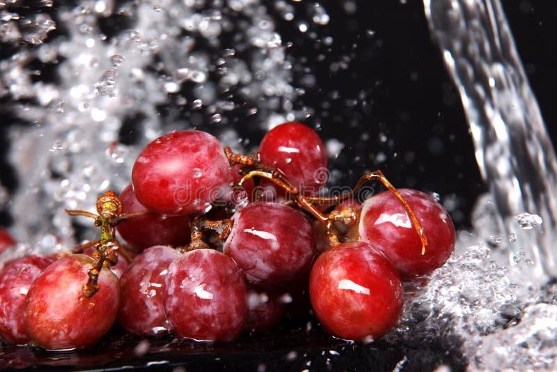 raisin sous l'eau photos stock
