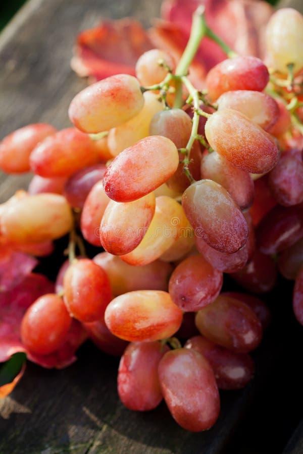 Download Raisins image stock. Image du moisson, nutrition, groupe - 45366925