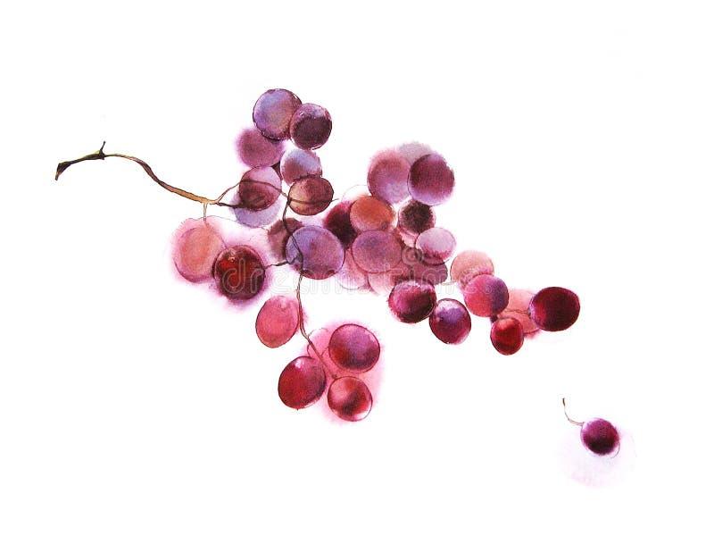 Raisins, aquarelle illustration de vecteur