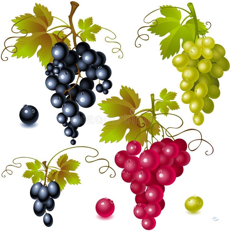 Raisins avec des lames illustration stock