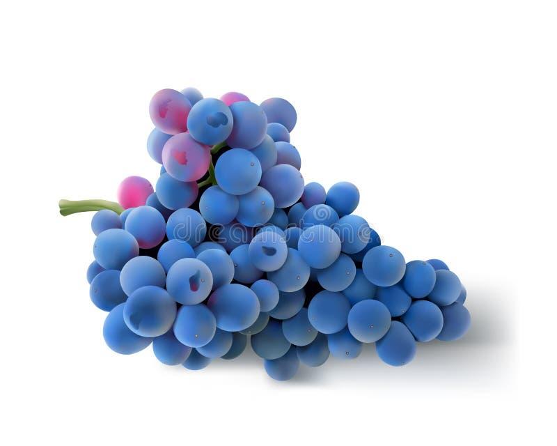 Raisins bleus Bloomy illustration libre de droits