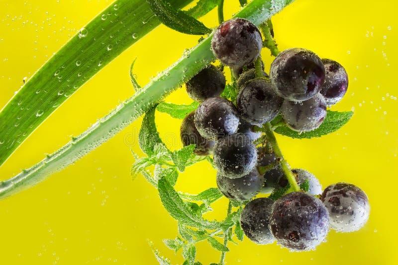 Raisins dans l'eau de scintillement image stock