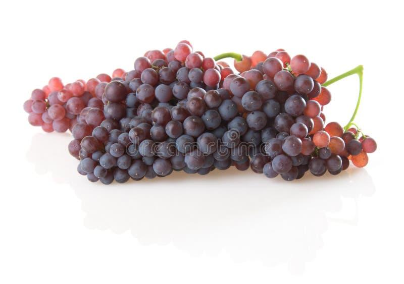 raisins de champagne images stock