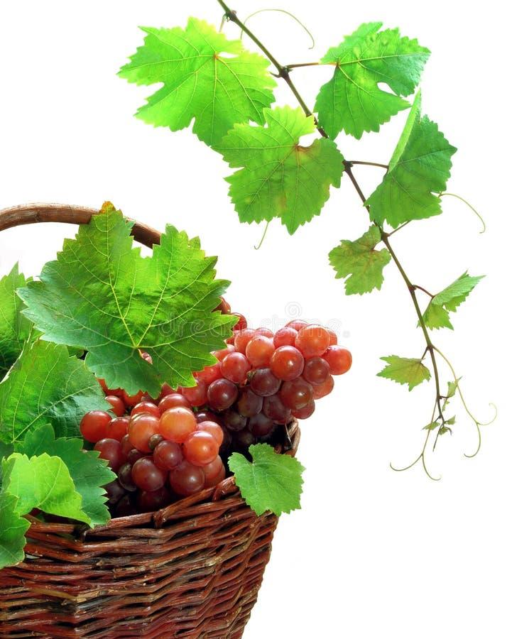 Raisins de cuve dans le panier image stock
