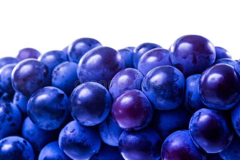 Raisins de cuve savoureux avant moisson photo stock