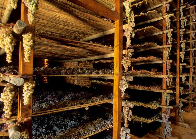 Raisins de Santo Avignonesi image stock