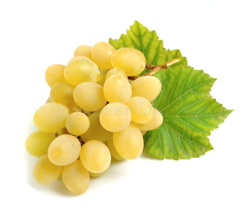 Raisins doux avec des feuilles photo stock