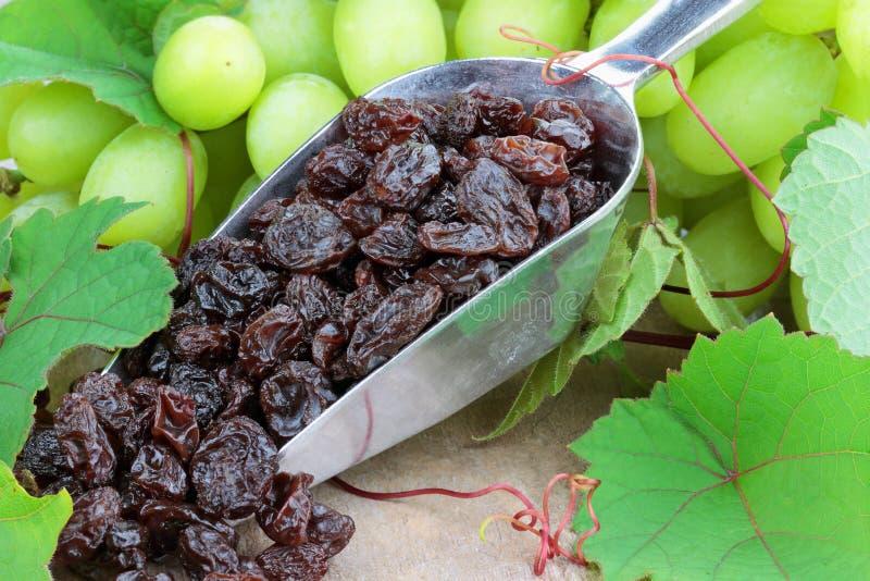 Raisins e uvas fotografia de stock royalty free