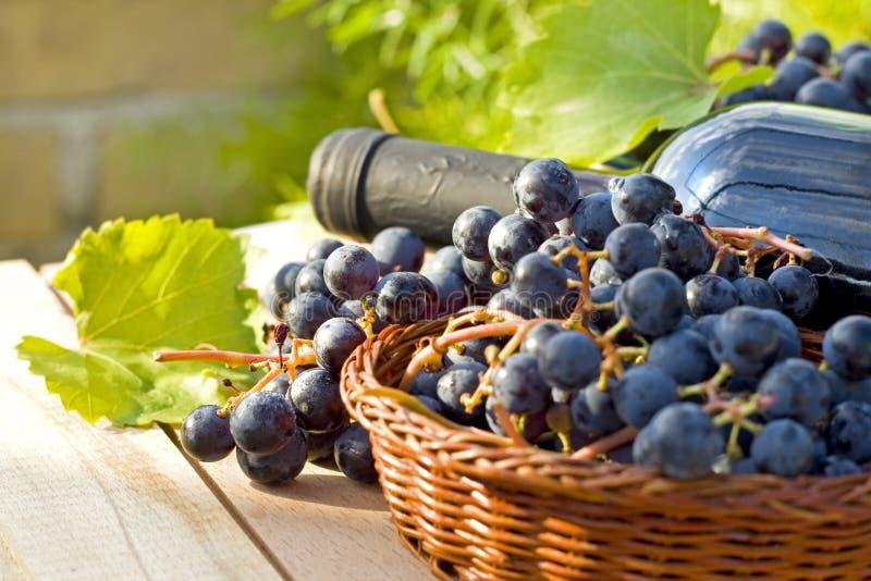 Raisins et bouteilles de vin photographie stock