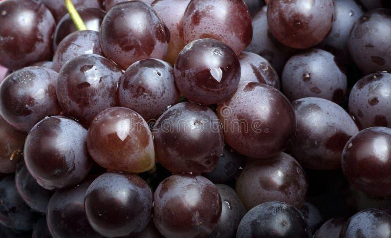 raisins frais photos stock
