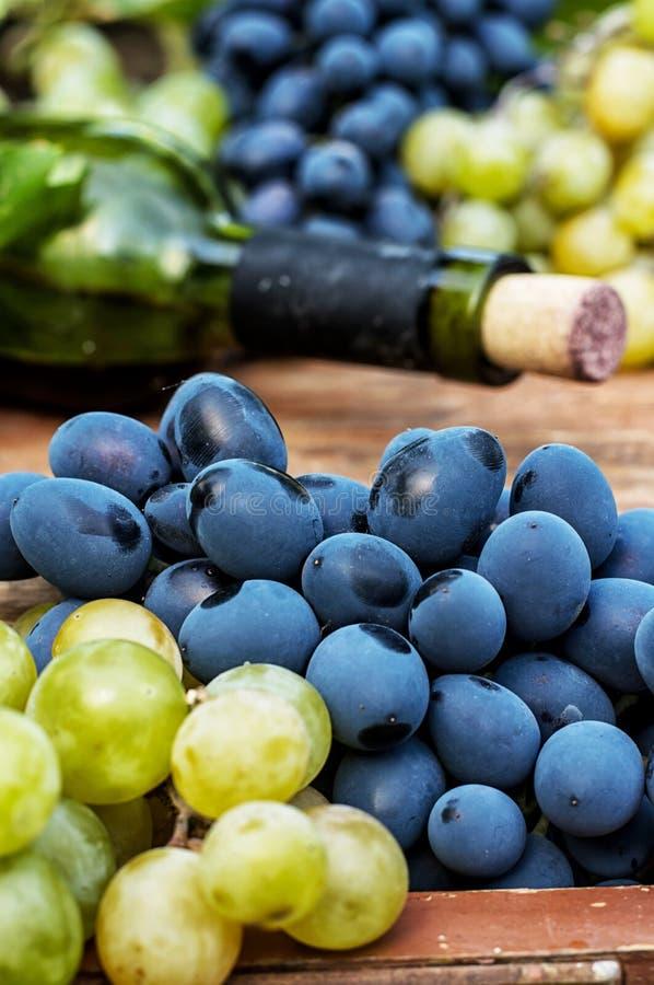 Raisins mûrs de vigne photographie stock libre de droits