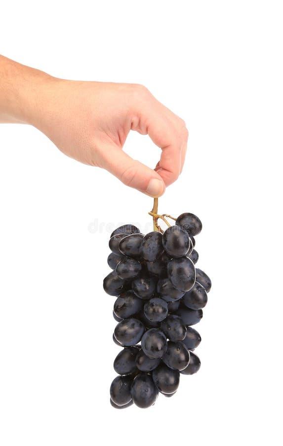 Raisins mûrs noirs à disposition. images libres de droits
