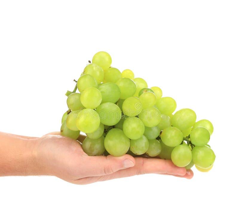 Raisins mûrs verts en main. photographie stock