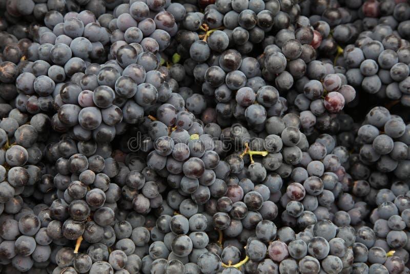 Raisins noirs photographie stock libre de droits