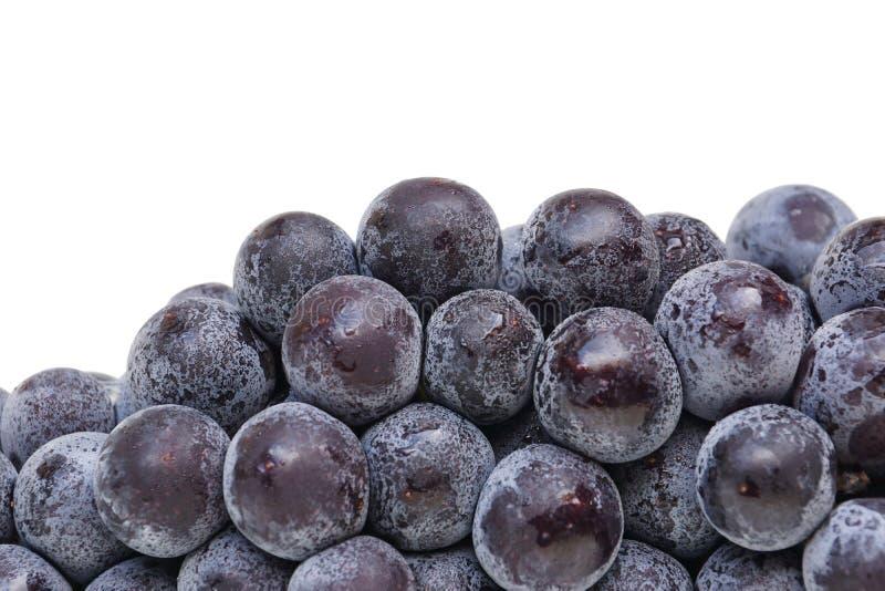 Raisins noirs photos stock