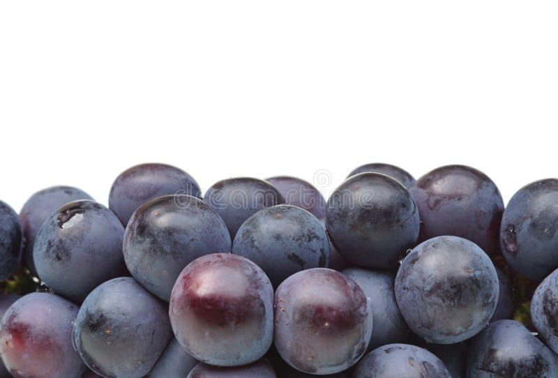 Raisins noirs photographie stock