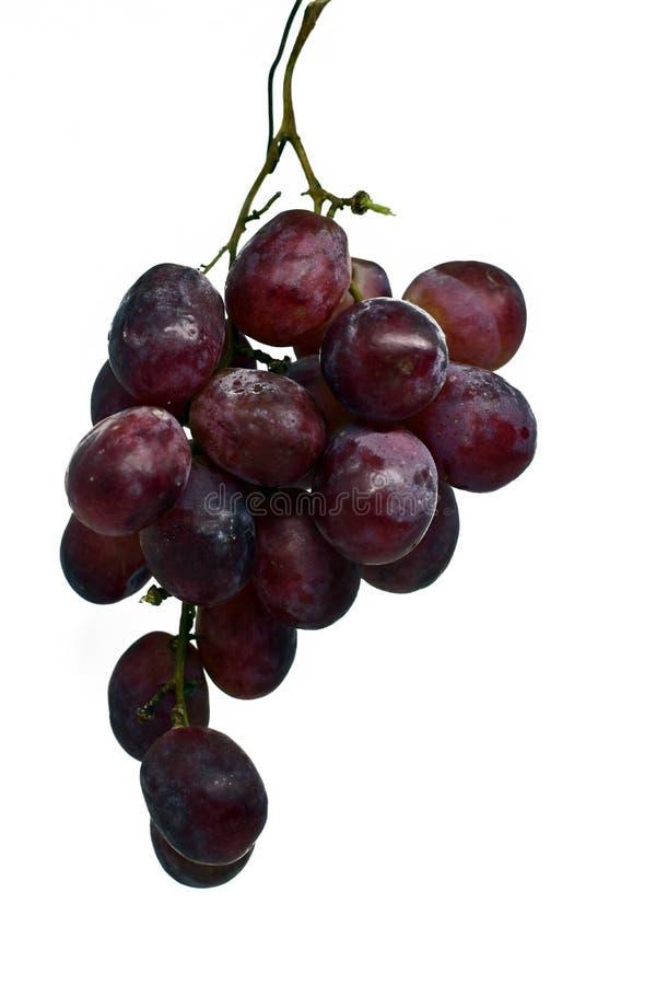 Raisins noirs frais d'isolement sur le fond blanc photo stock