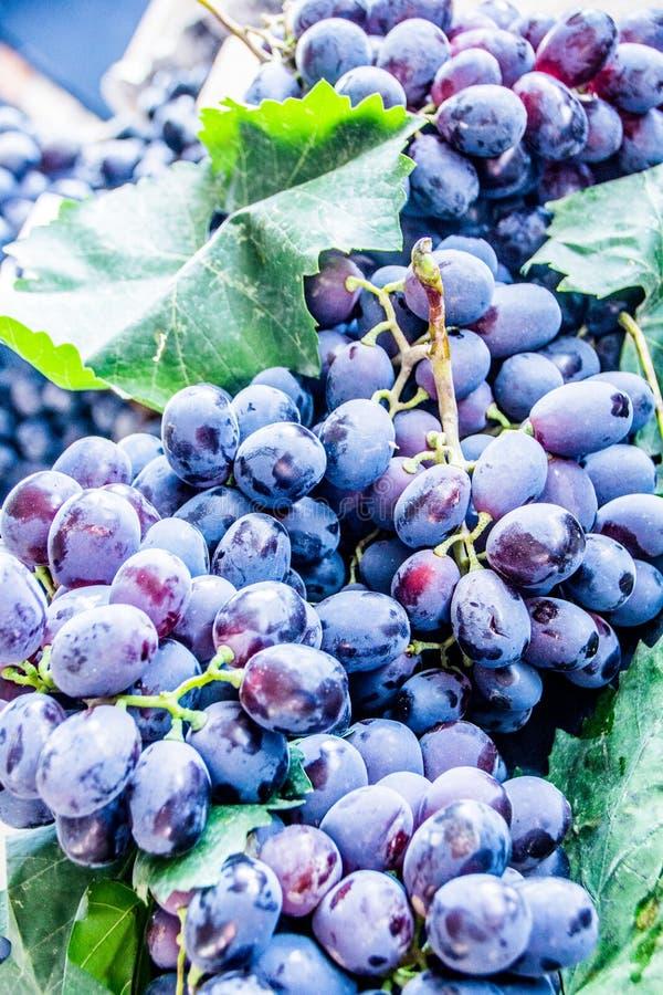 Raisins pourpres photo libre de droits