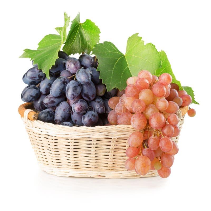 Raisins pourpres et roses dans le panier d'isolement sur le backgroun blanc images libres de droits