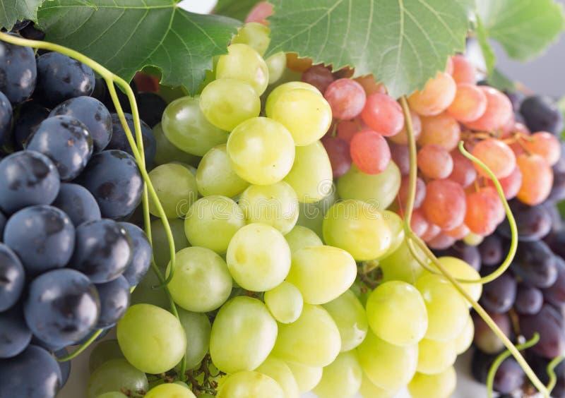 Raisins roses, pourpres et verts photos libres de droits