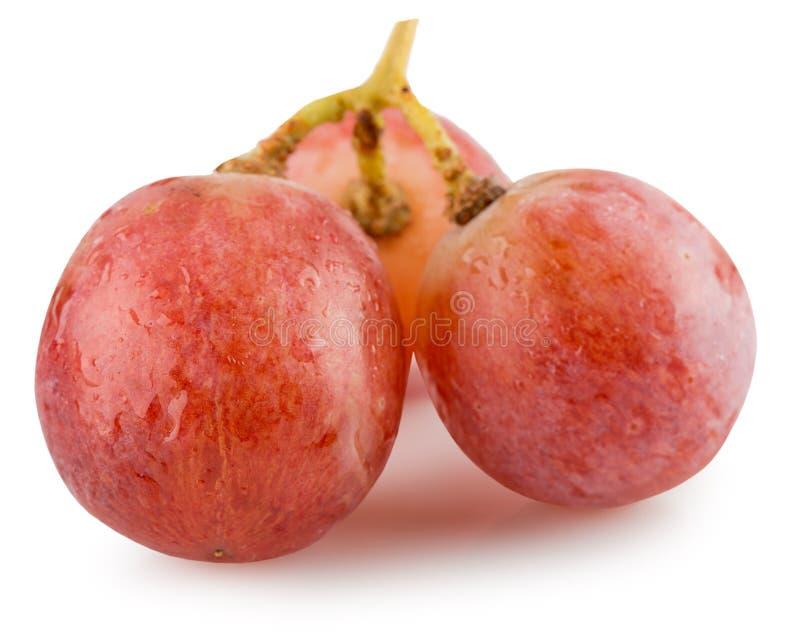 Raisins roses sur un fond blanc photographie stock libre de droits