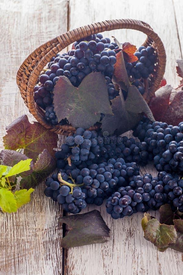 Raisins rouges avec des feuilles photographie stock