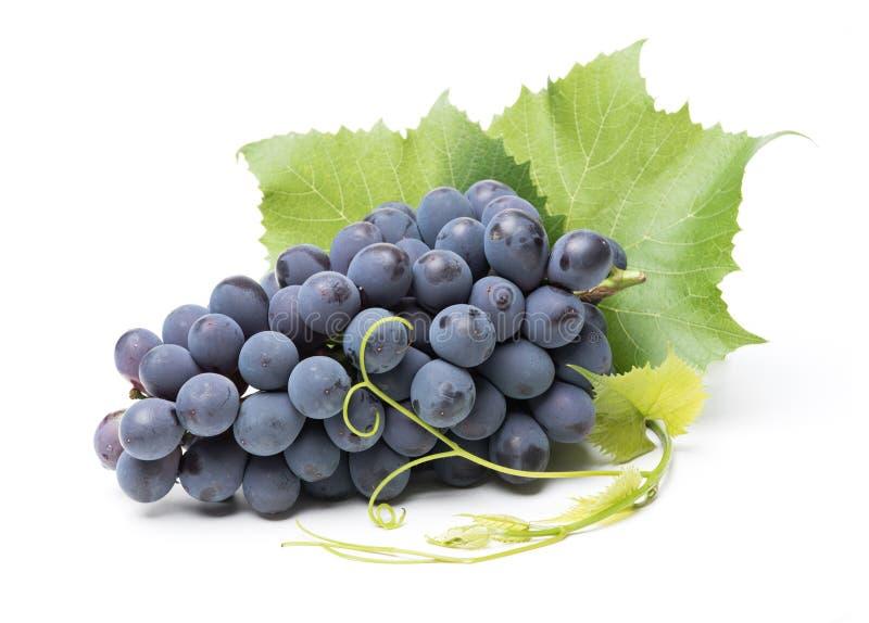 Raisins rouges avec des feuilles image stock