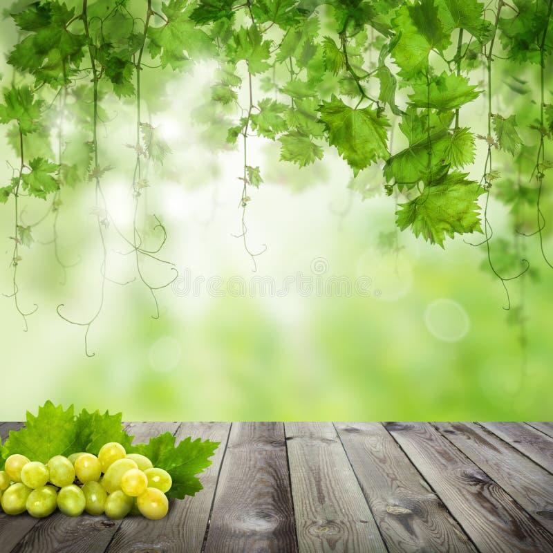 Raisins savoureux sur la table en bois fonc?e Fond vert ensoleill? photographie stock libre de droits