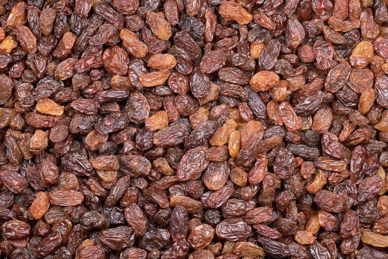 Raisins secs foncés, raisins secs image libre de droits
