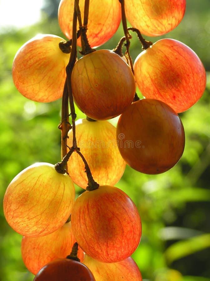 Raisins transparents rouges images stock