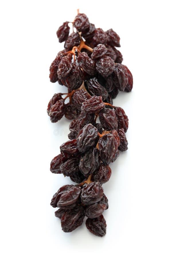 Raisins on the vine royalty free stock photography
