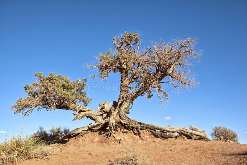 Raiz da árvore foto de stock royalty free
