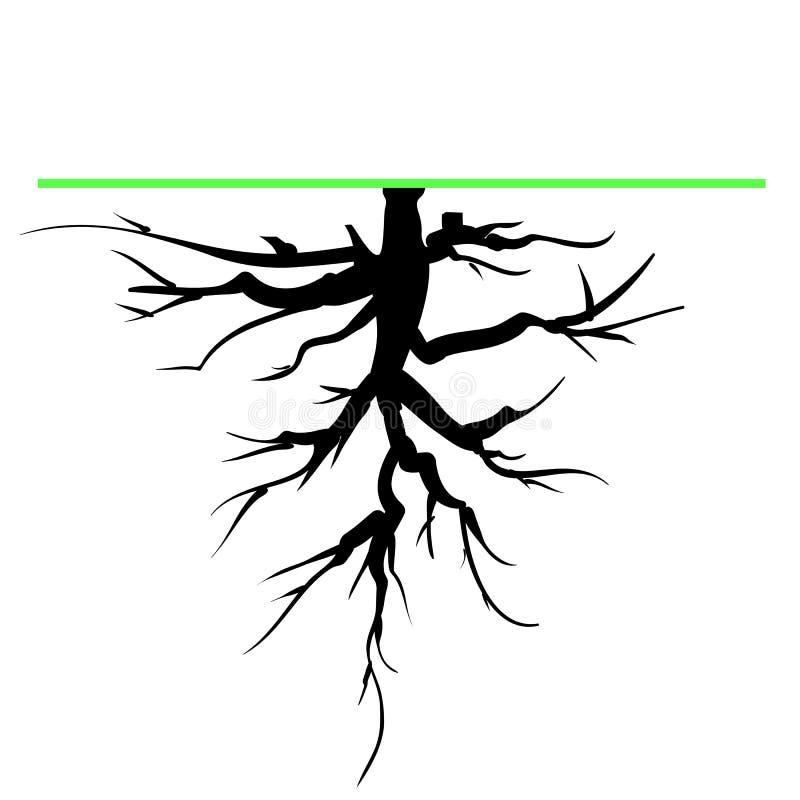 Raiz da árvore ilustração stock