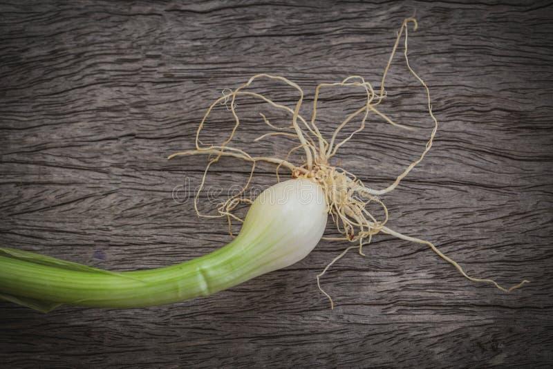 Raiz da planta da chalota ou de cebola na madeira velha imagem de stock royalty free